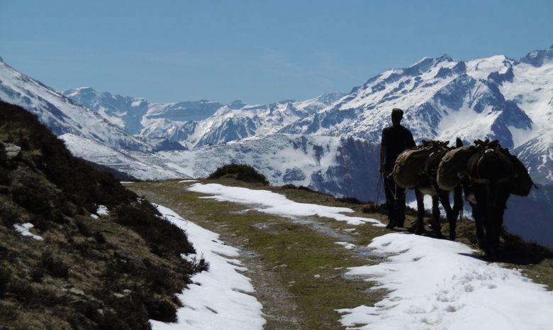 Randonnée itinérante avec des ânes-3