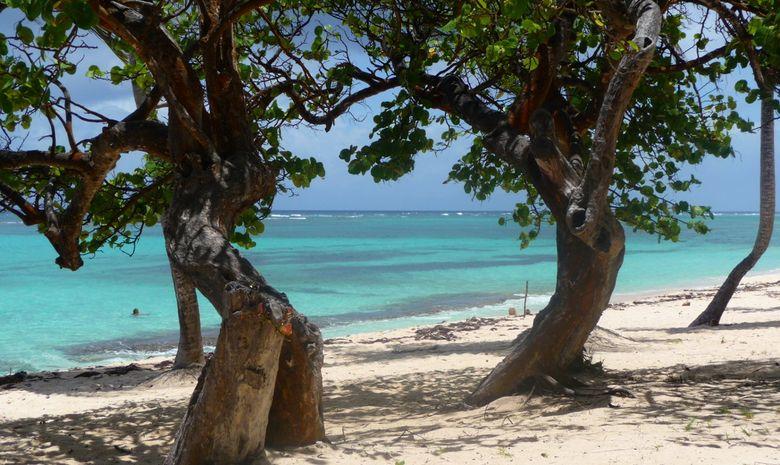 Croisière cabine LAG 470 Guadeloupe - avec hôtesse