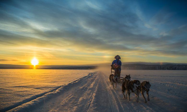 Séjour Chiens primitifs et Raquettes en Finlande