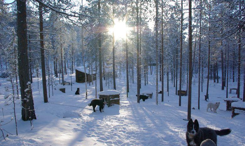 Séjour Multi-activités dans le nord de la Finlande-9