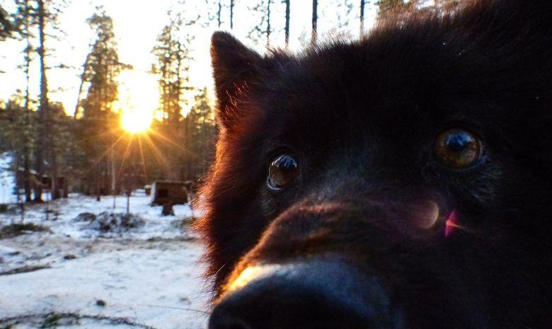 Séjour Multi-activités dans le nord de la Finlande-12