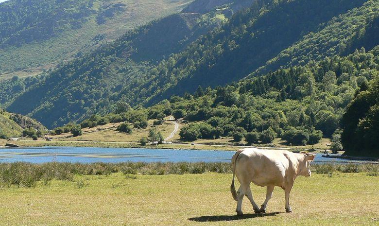 Stage Trail dans les Hautes-Pyrénées -7