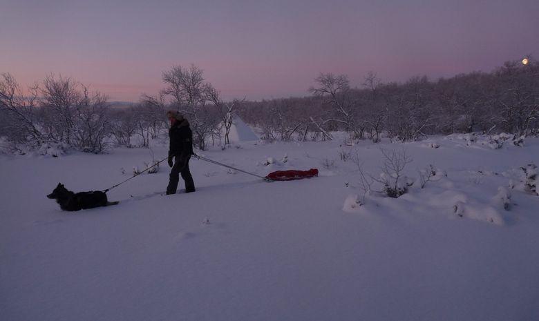 Raid à ski et pulka dans la réserve de Kevo-10