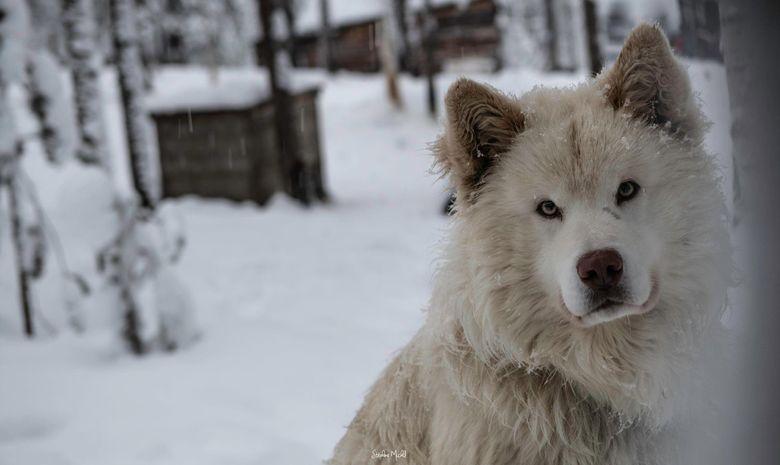 Raid à ski raquettes et pulka en Laponie