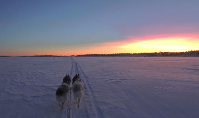 Raid en chien de traineau sur le lac Inari-5