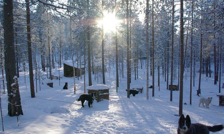 Raid en chien de traineau sur le lac Inari-11