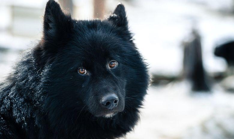 Raid en chien de traineau sur le lac Inari-10
