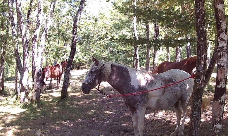 Randonnée à cheval aux portes du Lot-et-Garonne-10