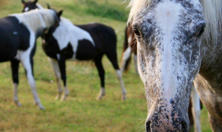 Randonnée à cheval aux portes du Lot-et-Garonne-6