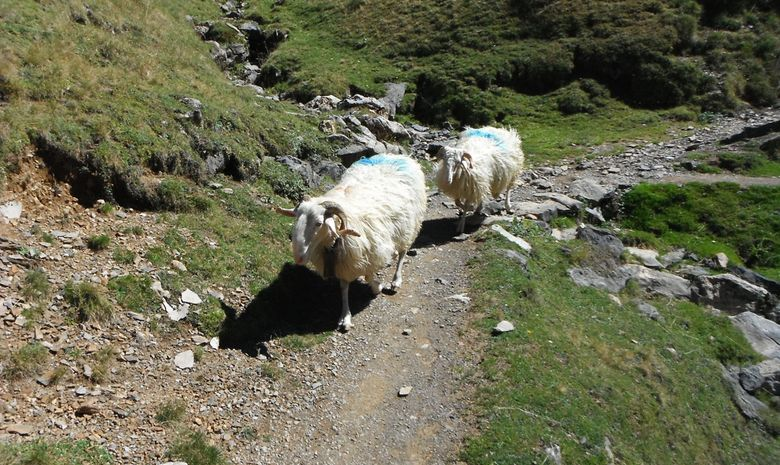 Autour du pic du Midi d'Ossau-2