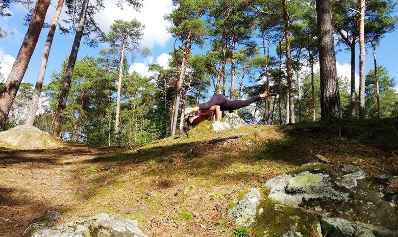 Stage yoga au cœur de la Forêt de Fontainebleau