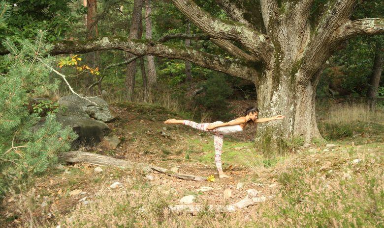 Yoga au coeur de la Forêt de Fontainebleau -8