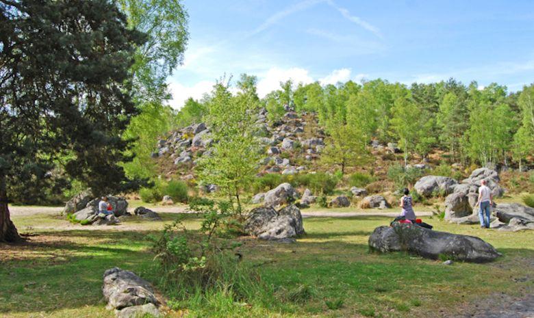 Yoga au coeur de la Forêt de Fontainebleau -4