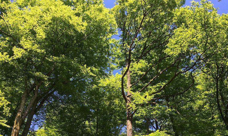 Randonnee Et Detente Au Spa Dans Les Vosges Kazaden