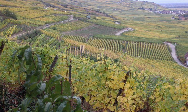 Séjour dégustation au coeur de l'Alsace en Liberté-12
