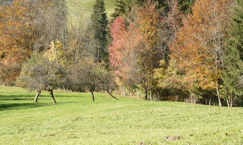 Weekend randonnée et Yoga près d'Annecy-1