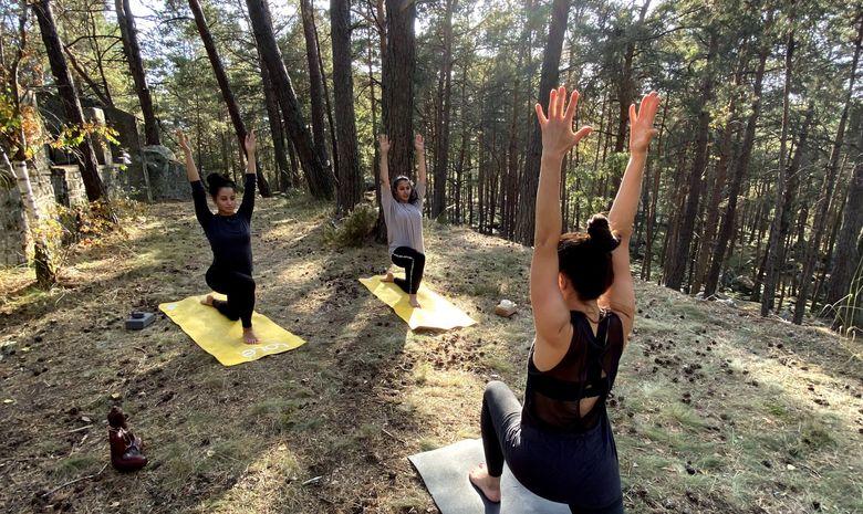 Stage Yoga & Randonnée équestre à Fontainebleau