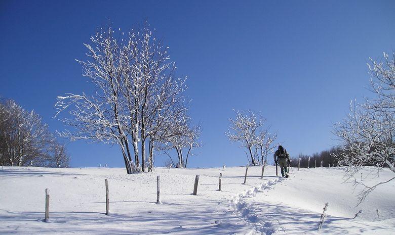 Randonneurs en raquettes marchant dans la neige