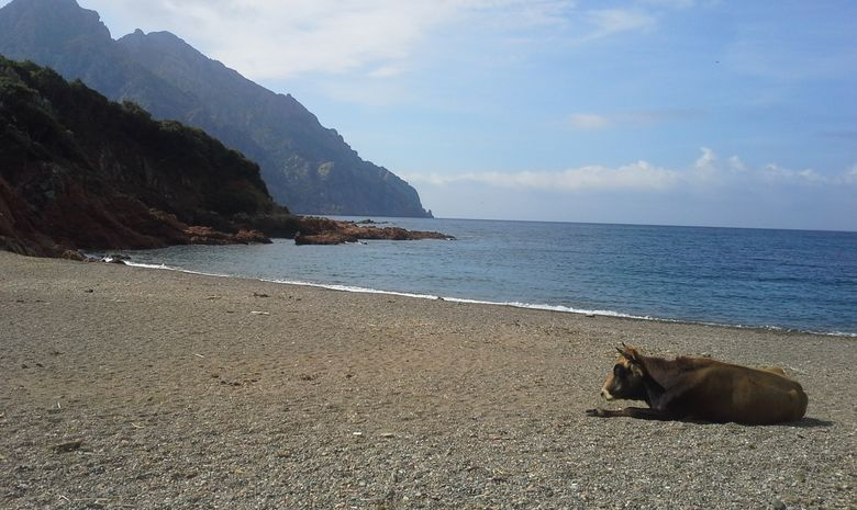 Double séjour : rando et voile en Corse (Calvi)-2