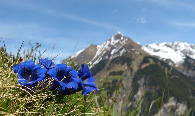 Raid alpin - Tour du Mont-Blanc en trek - 7 jours-5