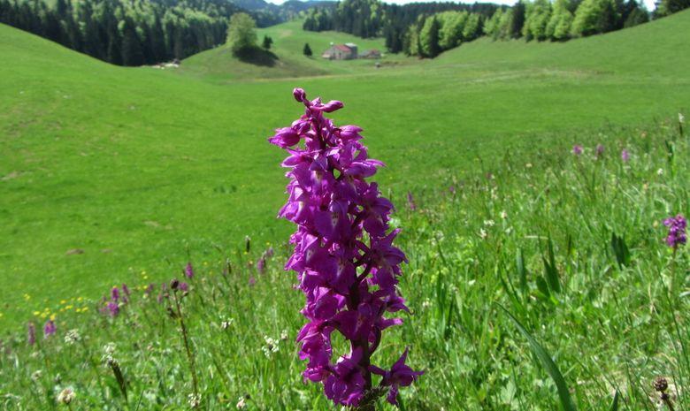 Rando à la journée dans le haut Jura-5