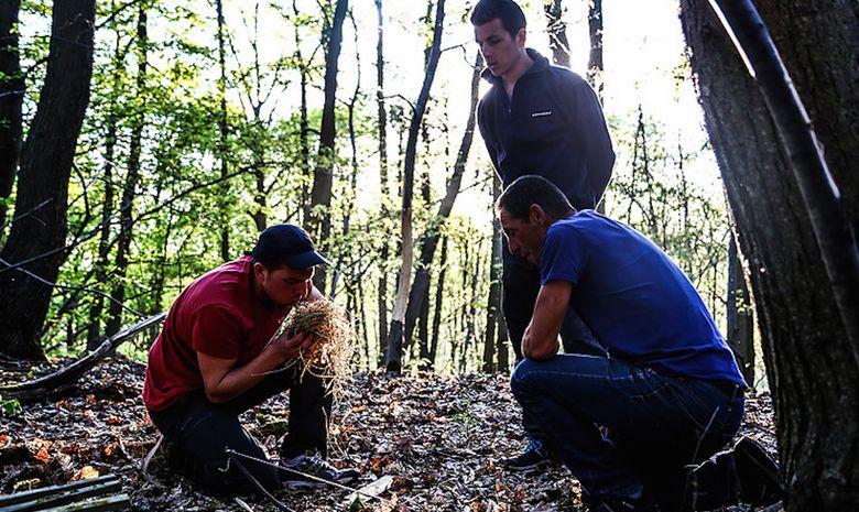 Stage de survie en milieu naturel forestier-1