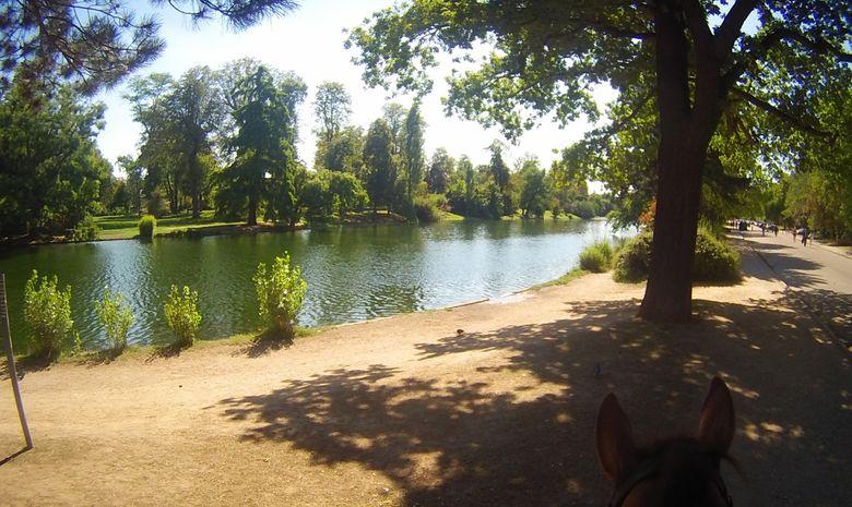 Balade à cheval dans le Bois de Boulogne-3