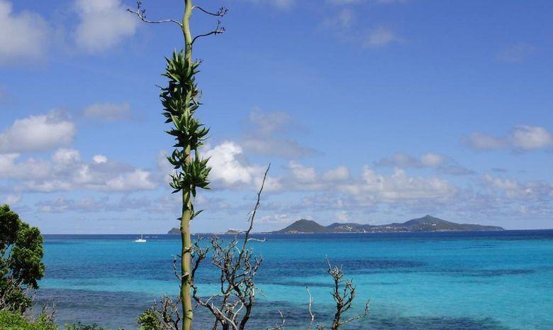 croisière dans les Grenadines-13
