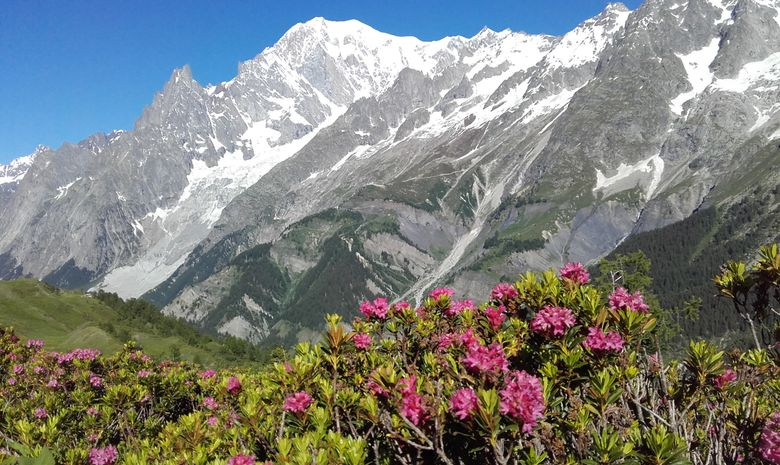 Panorama sur le Massif du Mont-Blanc