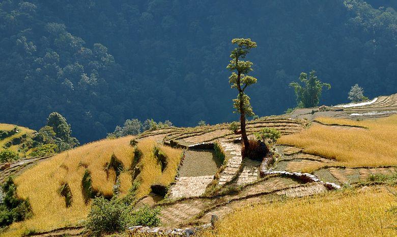 Sanctuaire de l'Annapurna-4