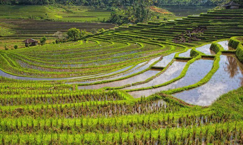 Randonnée à travers les rizières en terrasses