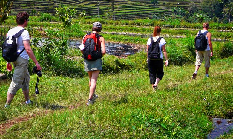 Randonnée à travers les rizières de Belimbing
