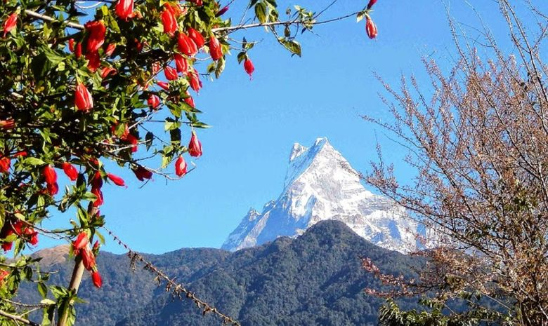 Des plaines du Teraï à l'Annapurna-7