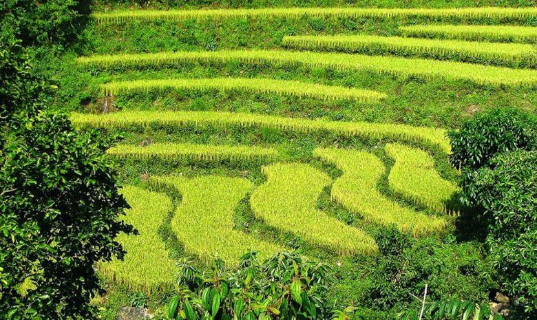 Des plaines du Teraï à l'Annapurna-4