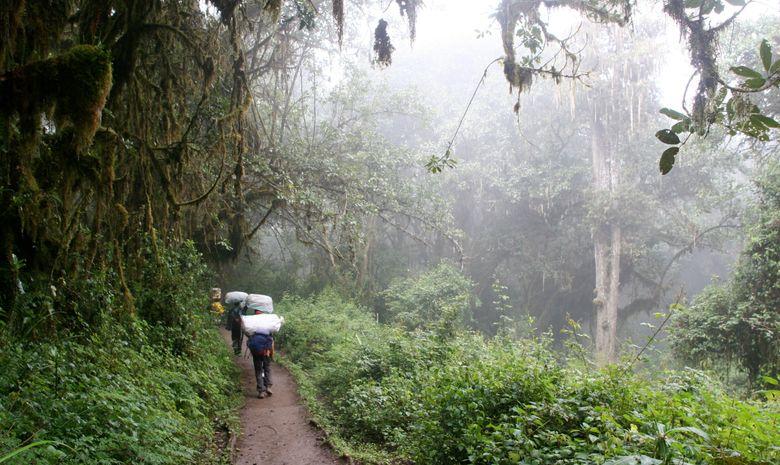 Trekkeurs marchant dans une forêt