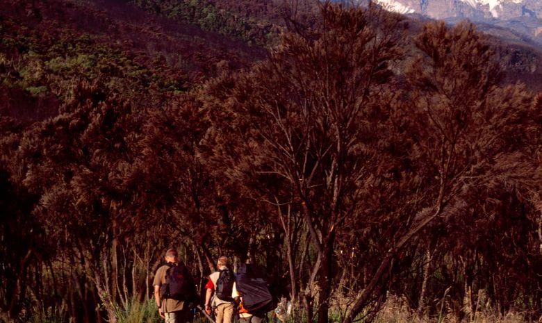 Ascension du Kilimandjaro (5895 m) - Voie Rongai-2