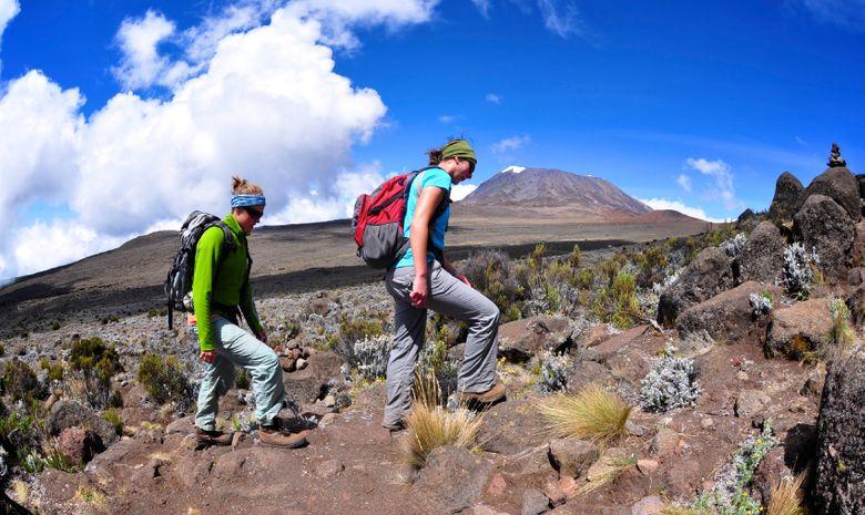 Ascension du Kilimandjaro (5895 m) - Voie Lemosho-4