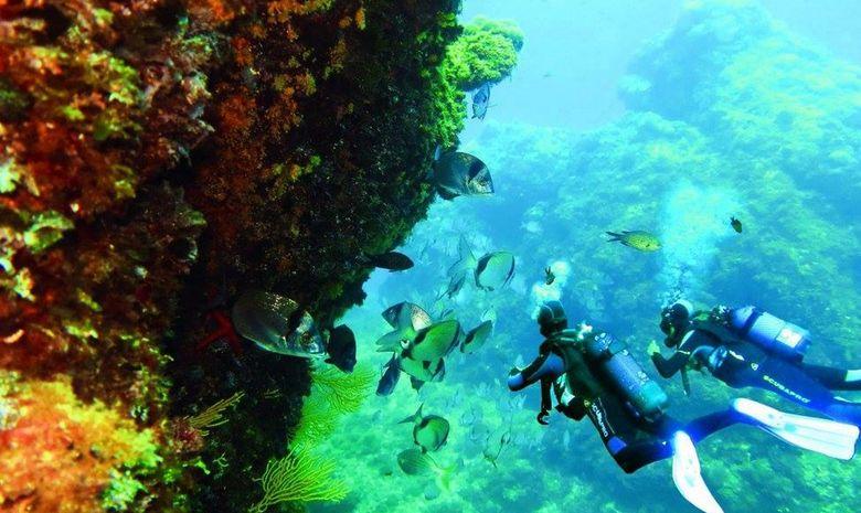 Stage plongée niveau 1 Scuba Diver / PE20-1
