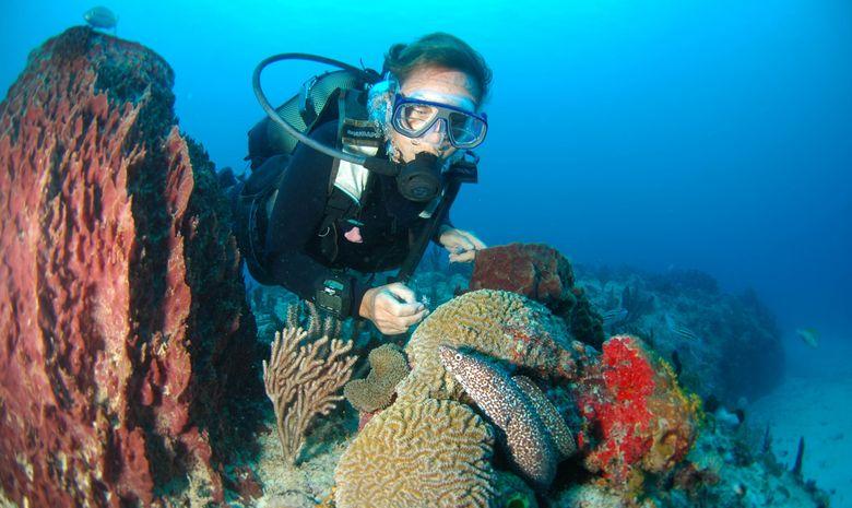 Formation Plongeur Niveau 1-3