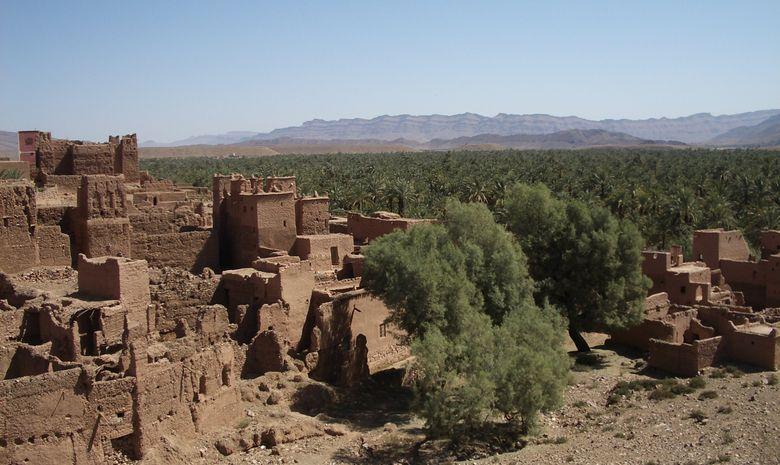 Palmeraie et dunes du Drâa-3