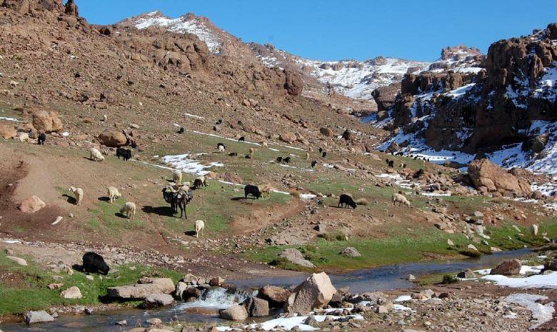 Moutons et vaches dans le Massif du Siroua