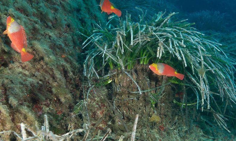 Séjour de plongée à Malte-2
