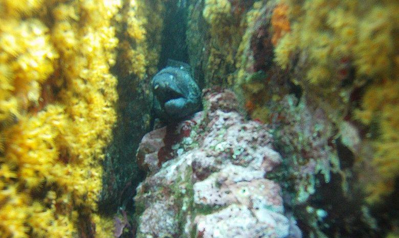Formation plongeur Niveau 1 à Fréjus-4