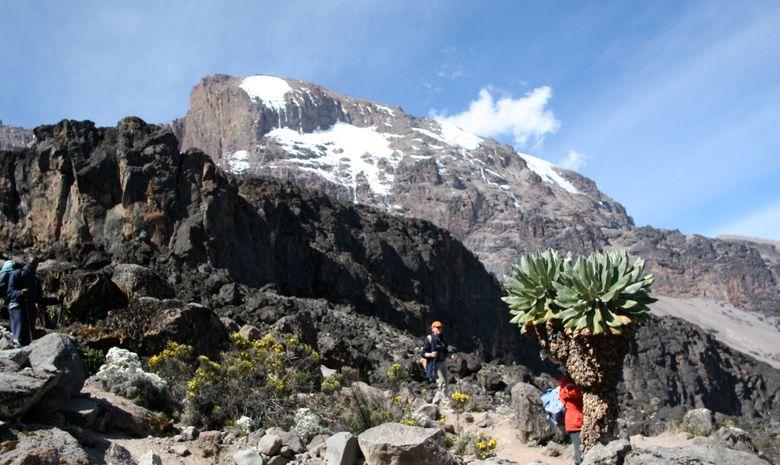 Ascension du Kilimandjaro par la Voie Lemosho-7