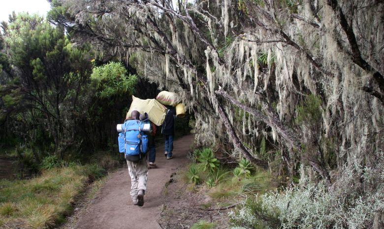 Ascension du Kilimandjaro par la Voie Lemosho-8