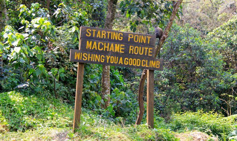 Ascension du Kilimandjaro - Machame Route-3