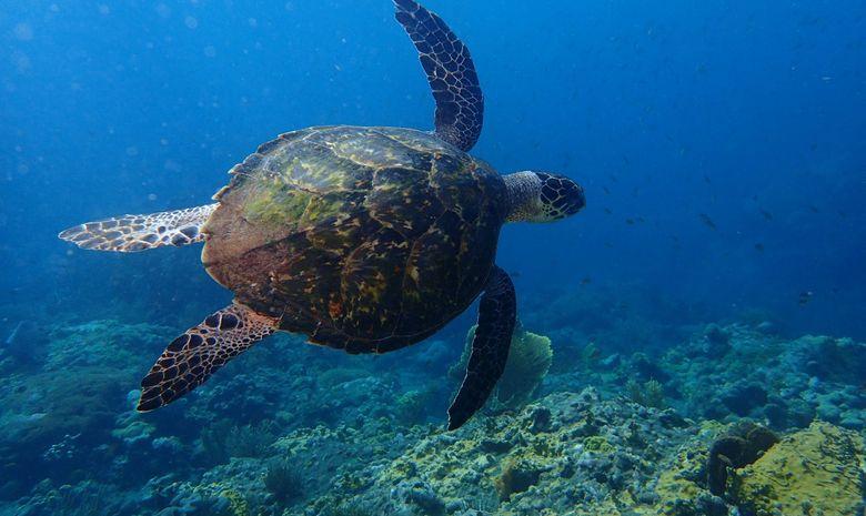 Croisière et plongée sous-marine aux Grenadines-8