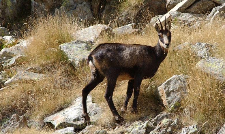 Trekking dans la Parc National du Mercantour-4