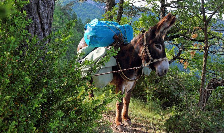 Fête de la transhumance en compagnie des ânes-4