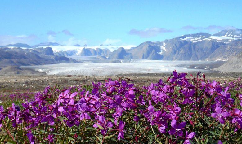 Scoresbysund : Le plus grand fjord du monde !-7